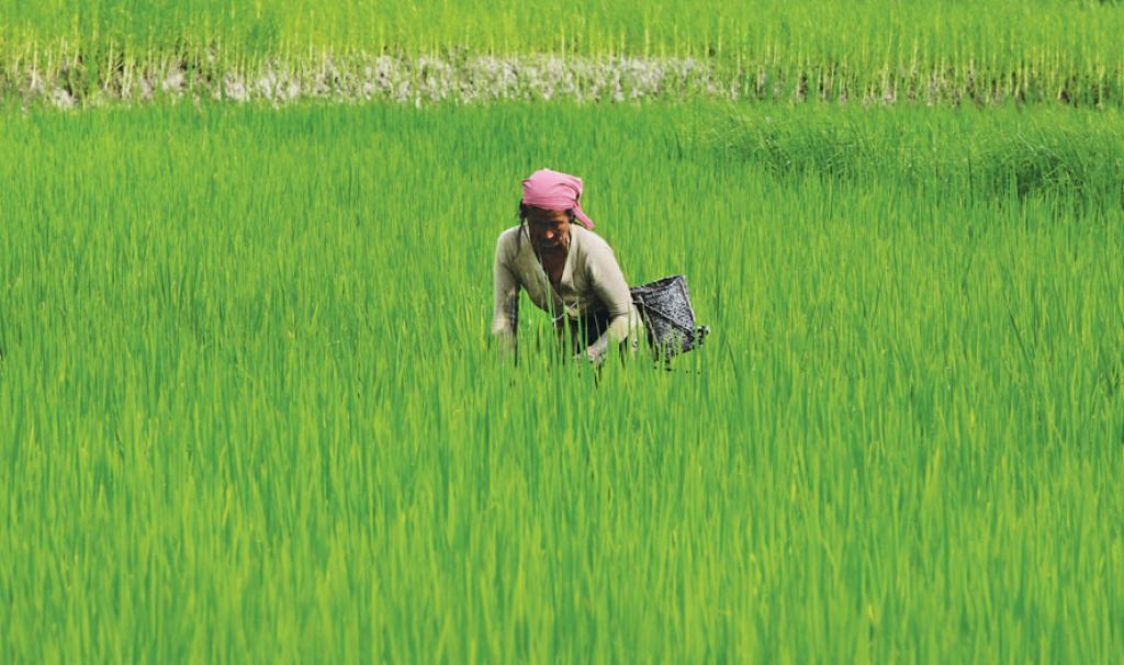 The Benefits of Pradhan Mantri Fasal Bima Yojana (PMFBY)